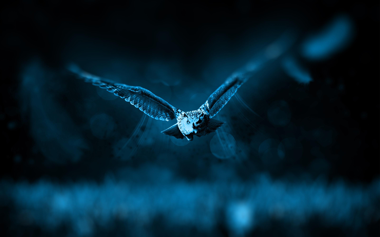 Forex owl