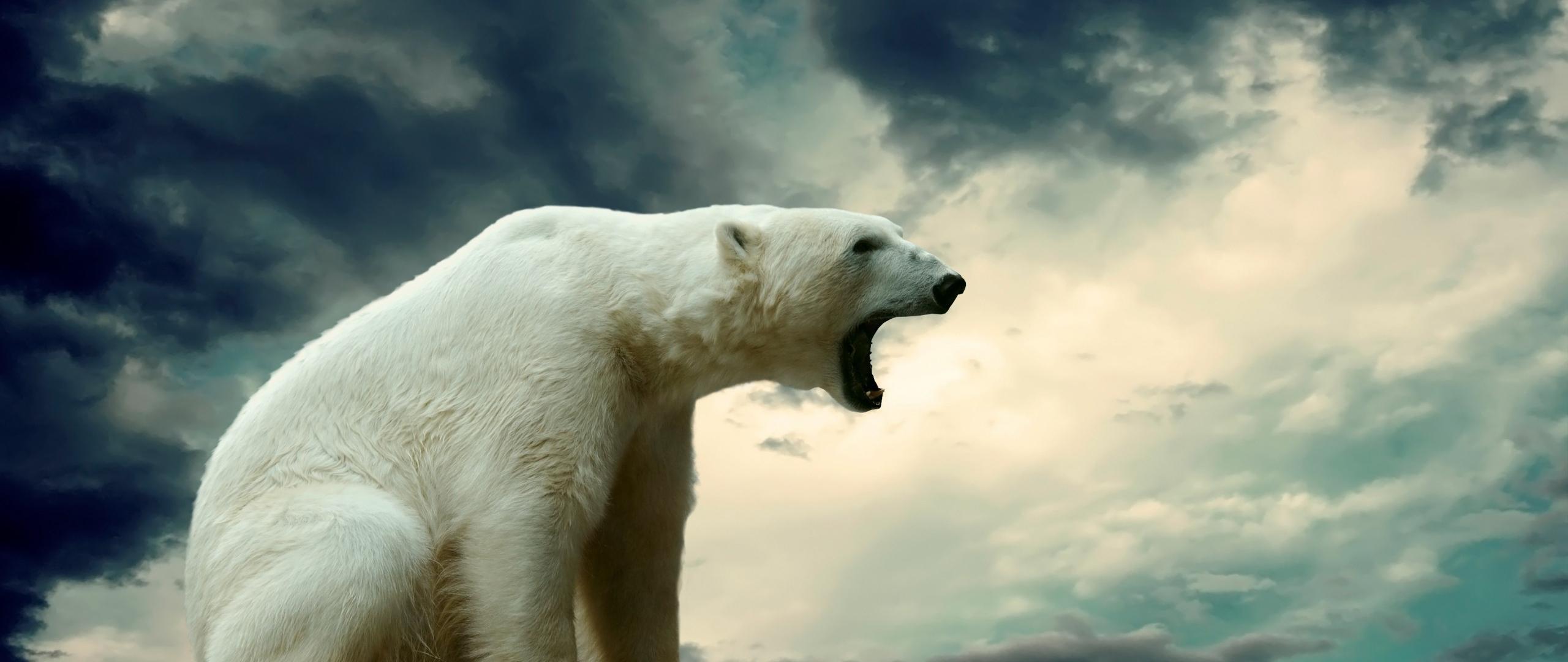 Советник автоматической торговли White Bear